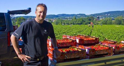 REKORDÅR: 2015 har vært et rekordår for jordbær. Petter Borgestad har all mulig grunn til å juble.  FOTO: MATS TVERAAEN