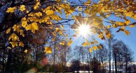 MED HØSTEN I FOKUS: Sol, lange skygger og skarpe farger gir gode bildemotiver. (Foto: Olaf Akselsen)