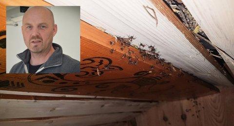 Ubudne gjester: Øyvind Selnes i Jondalen jobber som skadedyrbekjemper, og har mange oppdrag. Det er spesielt noen typer skadedyr som øker. Foto: Jenny Ulstein / Øyvind Selnes