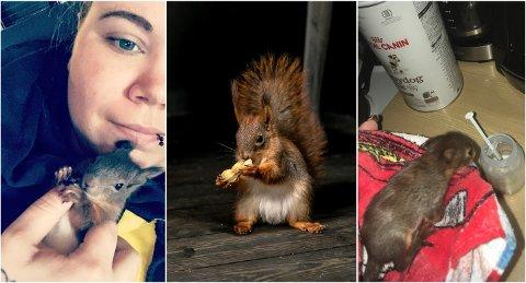 FINNER PÅ MYE RART: Stine Suserud forteller at det sjelden er en rolig dag med små ekorn i hus. Se video av alt det morsomme de finner på lenger ned i saken.
