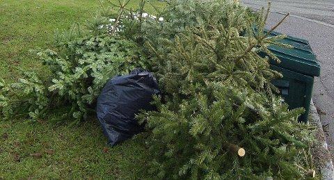 OPPSAMLING: Sjekk hvor du kan kaste juletreet ditt i Tønsberg.