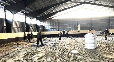 DUGNADSÅND: Hrimfaxi Hesteklubb er ikke stor, men når det har blitt invitert til dugnad i høst, har store deler av medlemsmassen stilt opp, forteller styremedlem Susanne Gjernes.