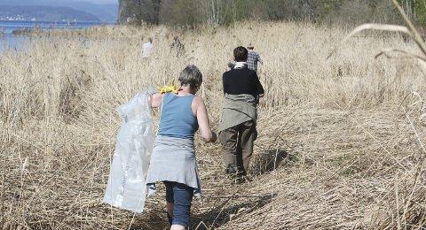 Mye søppel: I fjor ble det fjernt rundt fem tonn søppel fra Holmestrand. Her fra rydding i Mulvika.foto: Ulrikke g. Narvesen