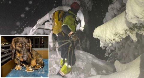 Reddet ned: Hunden Ask ble sittende fast på en fjellhylle på Skrim i nesten seks timer. Heldigvis klarte klatrere fra brannvesenet å redde hunden ned til slutt. Magnus Torsøe er takknemlig for hjelpen.