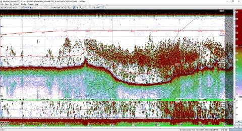 HEFTIG: De røde flekkene er gytende skrei. Aldri før har forskerne kunnet dokumentere så tette forekomster av skrei i Lofoten.