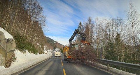 RYDDES: På grunn av både dyr som krysser veien og sikten til bilistene, rydder nå NCC veien for trær. Arbeidet skal pågå en liten stund på Tinnsjøveien.