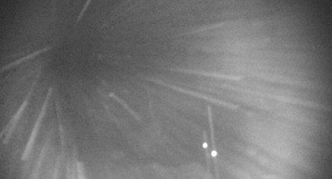 VEI STENGT: Slik ser det ut på Hardangervidda fredag morgen. Uvær, dårlig sikt og rasfare fører til kolonnekjøring og stengte veier flere steder i landet.