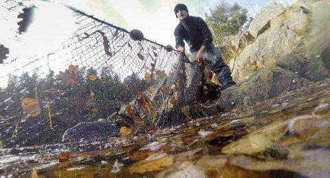 Garnfiske: Dersom kommunestyrevedtaket fra februar blir stående, vil garnfiske være forbudt i nærmere ni kvadratkilometer med sjøareale i Tvedestrand de neste 10 årene. Foto: Havforskningsinstituttet