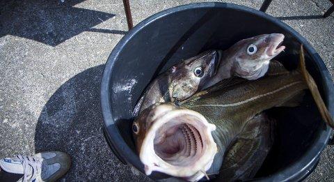 Trygg fisk: Ordførar Kristin Handeland stiller seg spørjande til kvifor det som har vore farleg i 11 år, plutseleg er trygt. – Er grensene heva, spør ho.