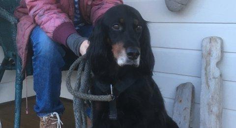 Her er hunden La Vida utanfor huset på Manger onsdag denne veka. Torsdag døydde hunden hos veterinæren i Knarvik.