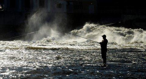 VIKTIG: Laksefisket er viktig for Drammensregionen, og nå har miljømyndghetene gitt grønt lys for utrydning av gyroen. Bildet er fra Hellefossen i Hokksund.