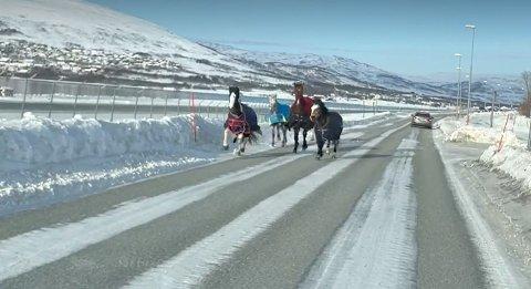 PÅ VEI TIL JEKTA: En bilist møtte på fire hester på Ringvegen i retning Jekta fredag ettermiddag. I alt fem hester har rømt fra rideskolen.