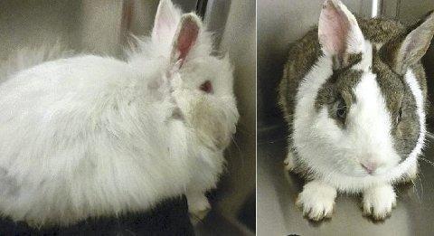 Disse to kaninene er funnet i Rabbaveien.