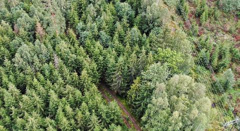 I dette ulendte terrenget ble den døde mannen funnet. Politiet tror de vet hvordan han havnet ned i denne skogen.