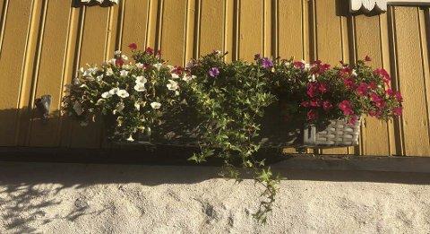 Denne blomsterkassen er borte.