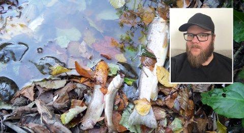 DØD FISK: Thor André Andersen fant ingen levende fisk i Rovebekken mandag 3. september. – Det pleier å være stor fisk som går opp Rovebekken. Men om ikke bekken blir ren nå, så vil ikke fisken bruke denne bekken til gyting, sier han.
