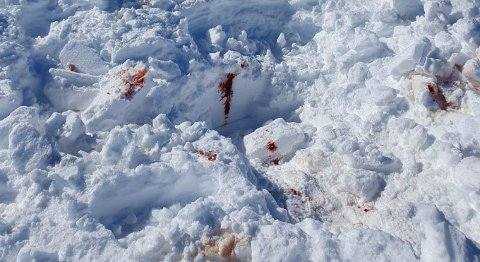 Plassen der sporene av ulvolig avlivning av jerv ble funnet.