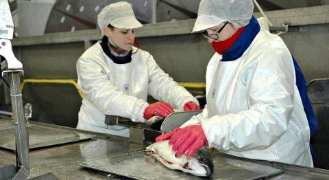 Laks fra Pure Norwegian Seafood på Averøya selges for ville priser i Sveits.