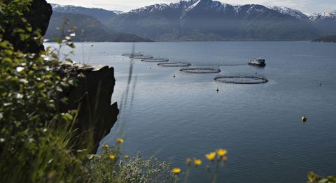 Heradsstyret i Kvam kommune har gått inn for å opne for akvakultur sør for Kvamsøy i Hardangerfjorden. Illustrerande arkivfoto
