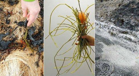 SØPPEL: Plastavfall kan forveksles med planter og organismer. Dermed havner det også i fordøyelsessystemet til dyr.