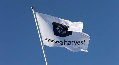 Marine Harvest lyktes godt med kjøp og salg av aksjer i Grieg Seafood denne uken. FOTO: VIDAR RUUD, NTB SCANPIX