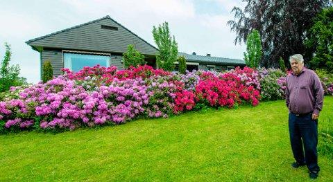 VAKKERT: Finn Løken nyter blomsterprakten fra plantene med rododendron han har i hagen.