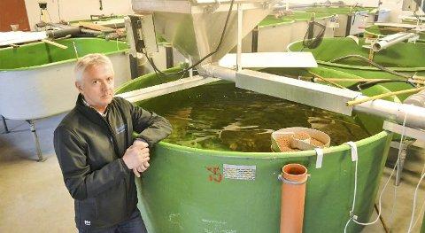 SMOLT: I store kar på klekkeriet i Hokksund lever 120.000 laksesmolt. – Snart starter deres vandring i havet, forteller fiskeforeningens Stig André Berg.