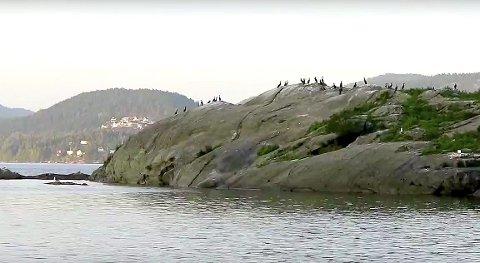 FUGLEIDYLL: Men hold god avstand nå når fuglene hekker. Snart er det egglegging og fugleunger som trenger ro. arkivfoto