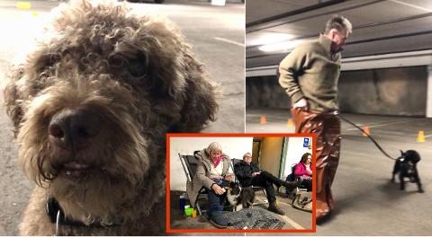 FEIRING: Hunde- og menneskeleker i Apenesfjellet.