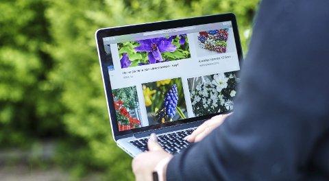 Advarer: Se listen nedenfor over hvilke planter Mattilsynet advarer mot.  Foto: Mattilsynet