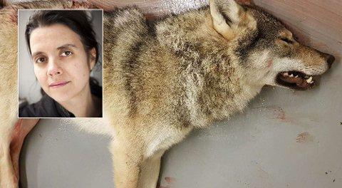 ANDRE LØSNINGER: Siri Martinsen er veterinær og leder i dyrevernorganisasjonen NOAH. Hun mener ulven som herjet i Finnmark ikke trengte å bli skutt.