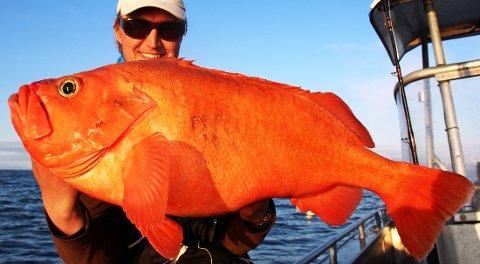 Øyvind Høier med beistet på 9,2 kilo, som han dro opp av havet fredag kveld.