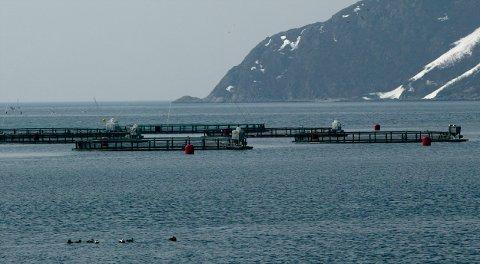 Det var herfra store mengder oppdrettslaks rømte i juli 2015. Marine Harvest har nå fått en bot på 360.000 kroner etter hendelsen. Foto: Ola Solvang