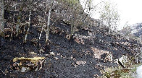 TØRR VÅR: Et utbrent område etter skogbrannen i Sokndal i Rogaland denne uka.