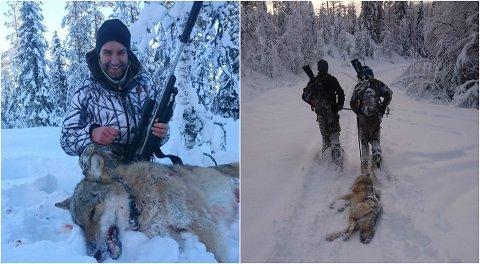 PÅ INNSIDEN: Tor Ola Dehli har de siste ukene vært med på ulvejakten. Til venstre har han akkurat felt en ulv. (Begge foto: Privat)