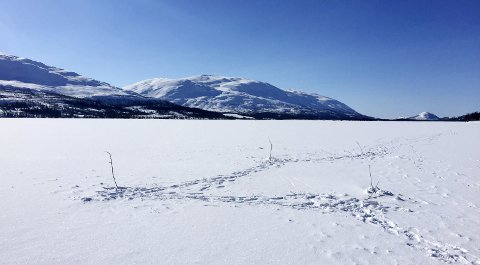 Kan bli skuterkjøring: Politikerne skal bestemme om det blir skuterkjøring over dette vannet. foto: rune Pedersen