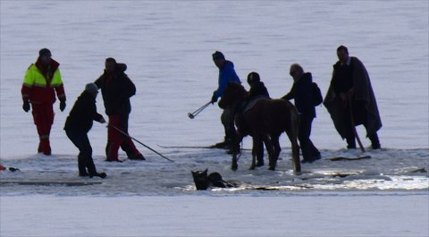 Den første hesten er akkurat kommet inn på sikker is, mens redningsmannskapene sikrer den andre fra å drukne. Foto: Frank Langånes