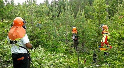 UNGSKOG: Å pleie skogen mens den er ung, kan man tjene stort på senere. Det er også en viktig for å holde skogdriften bærekraftig.