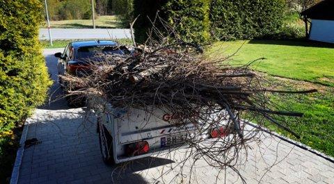 MÅ SIKRES: Kvist og kvast fra hagen veier ikke mye, men det skal sikres. Du skal ikke kjøre verken fort eller langt før greiner og kvister flyr av gårde og kanskje treffer fotgjengere eller andre biler.