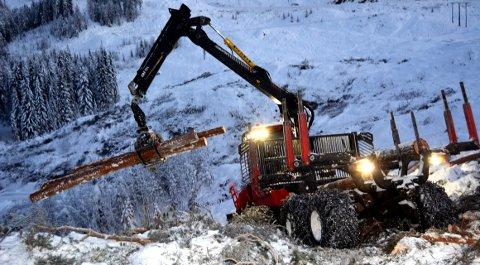 Rekord i sør: Viken Skog avvirket over 180.000 kubikk tømmer i 2019. (Foto: arkiv)