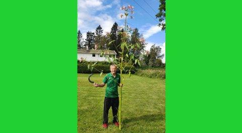 STORVOKST:Keith Redford med eksemplaret av en kjempespringfrø som ble funnet langs Nitelva ved Gaustadmåsan i helga.
