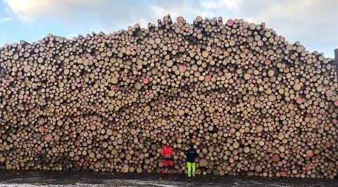 LANG FERD: Ein tømmerstokk frå Sunnfjord får ei lang ferd til Tyskland før den kjem heim, skriv artikkelforfattaren