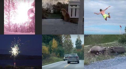 SLIK KAN DET VÆRE: Dette er bilder fra noen av videoene som OA har publisert det siste året. Du kan hjelpe oss med å vise hva som skjer i Vestoppland gjennom levende bilder, og få betalt for det.