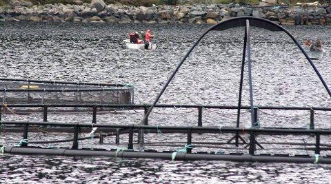 UTVIDAR: Eide fjordbruk får utvida anlegga sine.