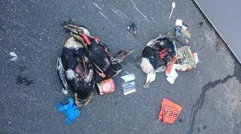 – Trist syn: Søppel og skrotter av ærfugl ble slengt ved containere bak Kornmagasinet på Skjærhalden i helgen. Det har opprørt flere på Facebook.