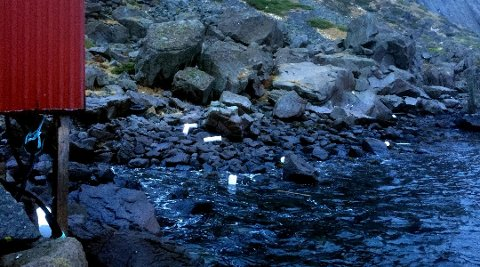 SABOTASJE: Lofoten Sjøprodukter AS mener de ble utsatt for sabotasje etter at mange isoporsylindre blåste på havet.