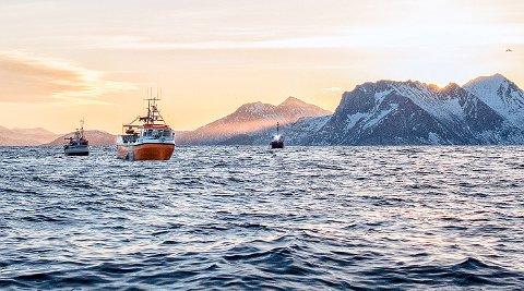 Morgenstund har gull i munn. Morgenstund blant juksafiskere.