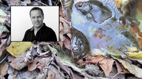 I september ble det funnet død flyndre i Rovebekken etter et utslipp. - Slikt er moro for ungene, skriver ansvarlig redaktør og daglig leder Steinar Ulrichsen.