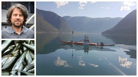 NYVINNING: Espen Johnsen, forskar ved Havforskningsinstituttet, tok i bruk kajakkdronen i Sogn for å leita etter brisling.