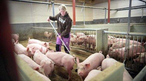 Audhild Slapgård er bonde og bosatt i Verdal.
